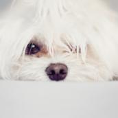 Puppy2 [LG Home+]
