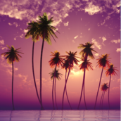 Aloha oe2 [LG Home+]