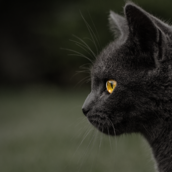 Black Cat2 [LG Home+]